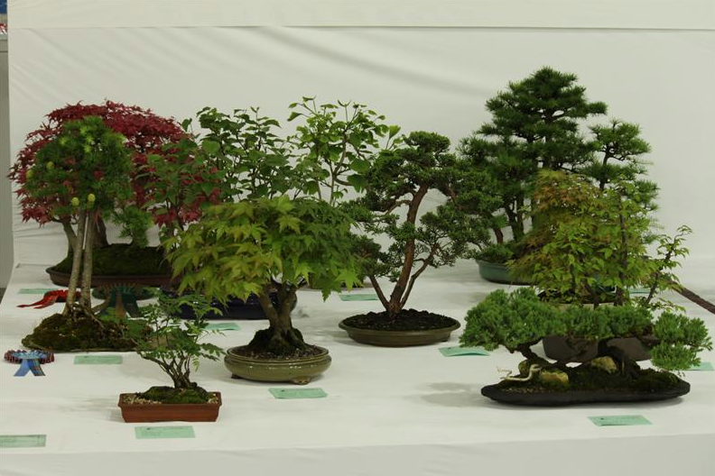 Bonsai Tree Species