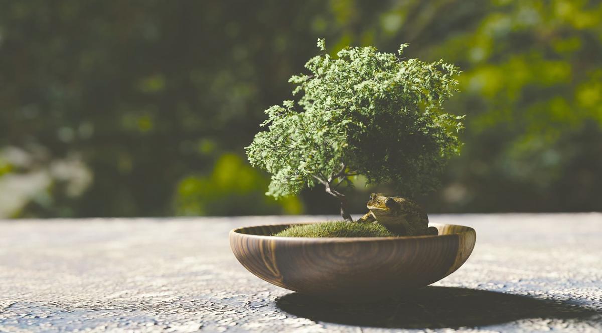 Growing a Bonsai Tree