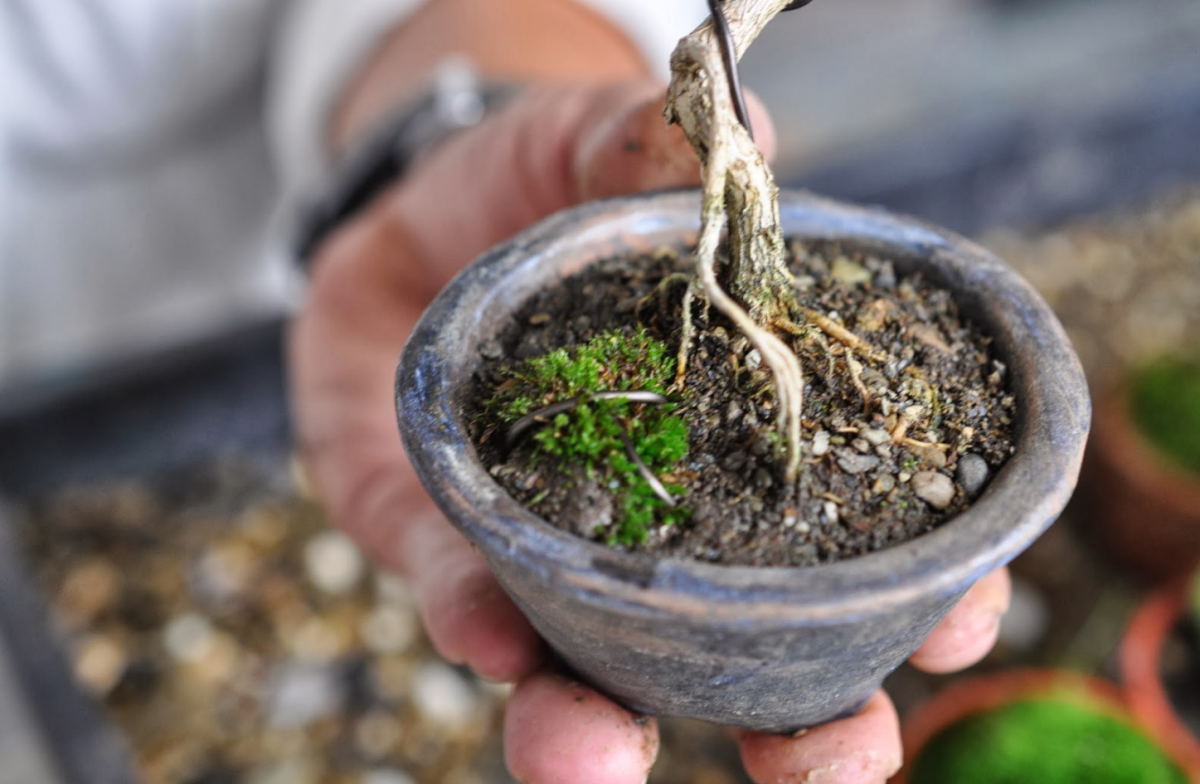 Make Bonsai Soil